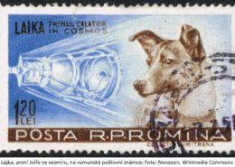 Živá historie: Před 61 roky vynesl Sputnik 2 do kosmu psa Lajku, první zvíře ve vesmíru