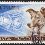 HISTORIE: Před 62 roky vynesl Sputnik 2 do kosmu psa Lajku, první zvíře ve vesmíru