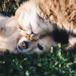 ZVÍŘATA: Donald Trump podepsal zákon o zákazu konzumace psího a kočičího masa v USA