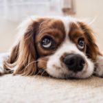 BIZÁR: Francouzské městečko zakázalo psům nadměrné štěkání