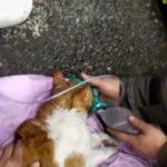 VIDEO: Zázračná záchrana dvou koček po intoxikaci pomocí kyslíkové masky