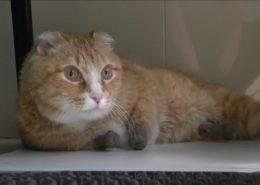 VIDEO: První kočka na světě, která má na všech čtyřech končetinách protézy