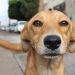 PARADOX: Úředníky v Černošicích nezajímá týrání zvířat, ale Babiš