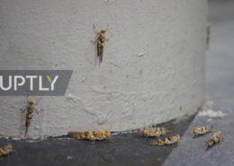 VIDEO: Invaze kobylek děsí obyvatele Las Vegas a ohrožuje podniky