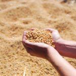 BLOOMBERG: Americké zemědělce likviduje obchodní válka s Čínou