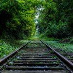 SENÁTOŘI nechtějí povolit kácení stromů v blízkosti kolejí
