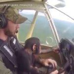 VIDEO: Pilot zachránil malého šimpanze