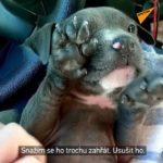 VIDEO: Policisté zachránili promrzlé štěně