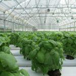 KLIMA: Francouzi zakázali v zimě prodej letní BIO zeleniny a ovoce