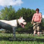 VIDEO: Komunikace s hluchým psem pomocí znakového jazyka
