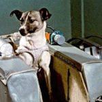 HISTORIE: Před 63 roky vynesl Sputnik 2 do kosmu psa Lajku, první zvíře ve vesmíru