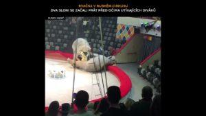 VIDEO: Dvě slonice se začaly prát v cirkusu před očima utíkajících diváků